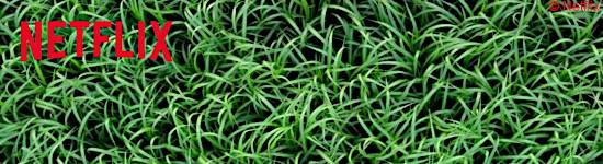 Im hohen Gras - Offizieller Trailer